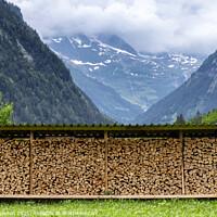 Buy canvas prints of Chopped Wood near Lauterbrunnen by Paul Stapleton
