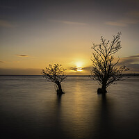 Buy canvas prints of Twin Trees Lough Neagh, Northern Ireland by KEN CARNWATH