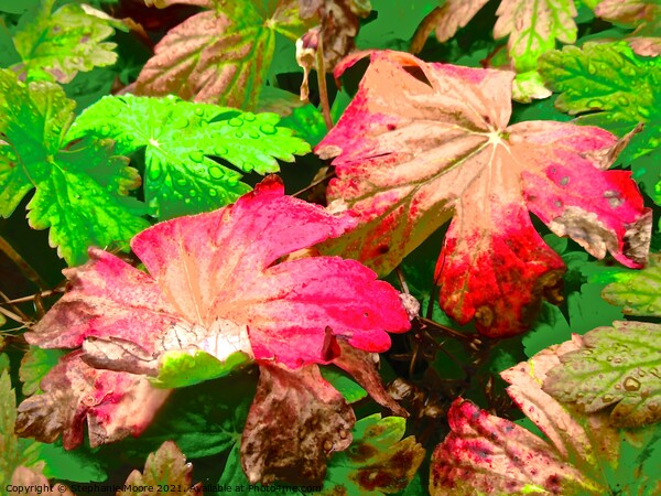 Colourful leaves Framed Print by Stephanie Moore