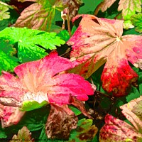 Buy canvas prints of Colourful leaves by Stephanie Moore