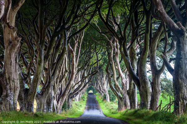 The Dark Hedges Canvas Print by Jim Monk