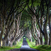 Buy canvas prints of The Dark Hedges by Jim Monk