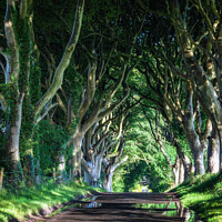 Buy canvas prints of The Dark Hedges, Northern Ireland by Jim Monk