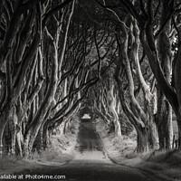 Buy canvas prints of Dark Hedges by Jim Monk