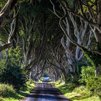 Buy canvas prints of The Dark Hedges of Antrim by Jim Monk