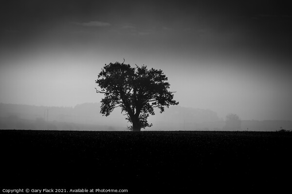 Louth Lincolnshire, Misty lone tree on a ploughed field in Back and White Canvas Print by Gary Flack