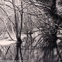 Buy canvas prints of Winter trees in water by Stuart Chard
