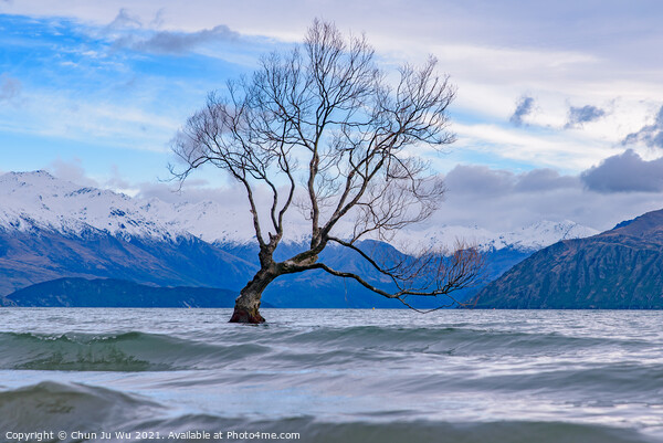 Wanaka tree and Lake Wanaka in winter, New Zealand Framed Print by Chun Ju Wu