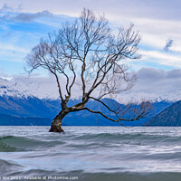Buy canvas prints of Wanaka tree and Lake Wanaka in winter, New Zealand by Chun Ju Wu