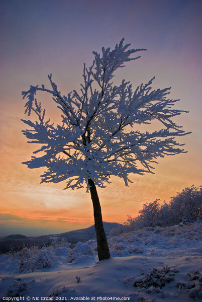 A tree in the snow at sunset Framed Mounted Print by Nic Croad