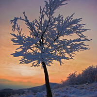 Buy canvas prints of A tree in the snow at sunset by Nic Croad