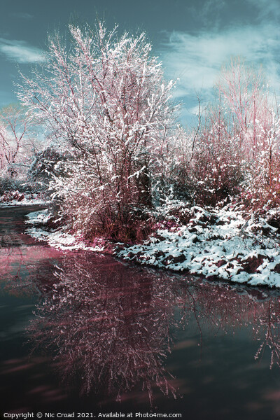 Snow covered tree reflected in water Framed Print by Nic Croad