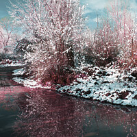 Buy canvas prints of Snow covered tree reflected in water by Nic Croad