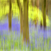 Buy canvas prints of Bluebells and Spring Trees Middleton Woods by Mark Sunderland