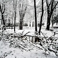 Buy canvas prints of WINTER ARRIVES by Russell Mander