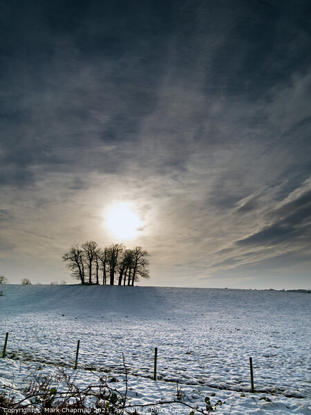 Winter tree silhouette with snowy field and dramatic sky Acrylic by Mark Chapman