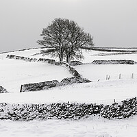 Buy canvas prints of Yorkshire Dales in the Snow by Sonny Ryse