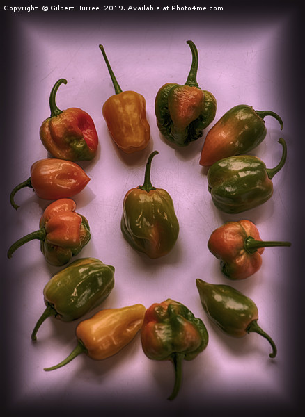 Hottest Chillies in The World Canvas print by Gilbert Hurree