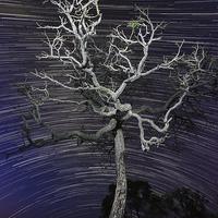 Buy canvas prints of Star trails in the cerrado by Gabor Pozsgai