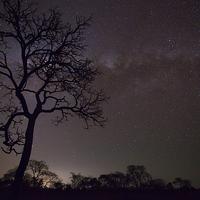 Buy canvas prints of Cerrado by night by Gabor Pozsgai