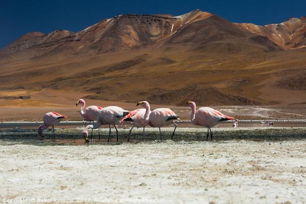 Laguna Colorada, Andes, Bolivia Canvas print by Gabor Pozsgai