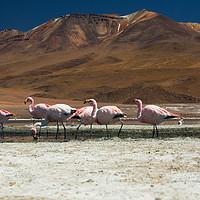 Buy canvas prints of Laguna Colorada, Andes, Bolivia by Gabor Pozsgai