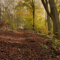 Buy canvas prints of Autumn in Brantingham Woods by Sarah Couzens