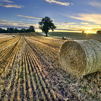 Buy canvas prints of Last Of The Bales by Fee Easton