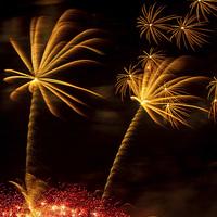 Buy canvas prints of  Palm Tree Fireworks by Steve Wilson