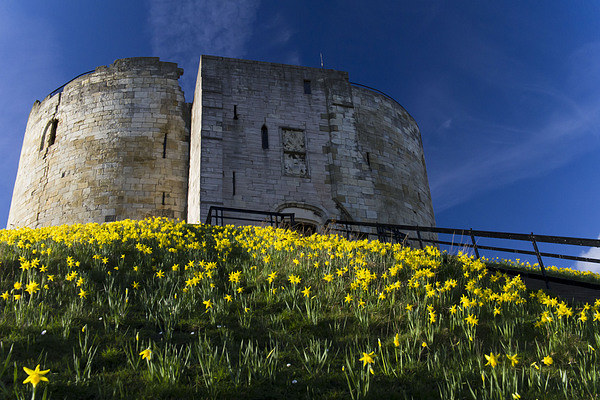 Tower and Daffodils Canvas Print by Steve Wilson