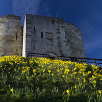 Buy canvas prints of Tower and Daffodils by Steve Wilson