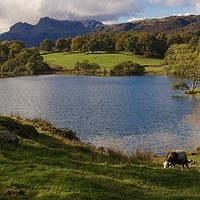 Buy canvas prints of Loughrigg Tarn by Kleve