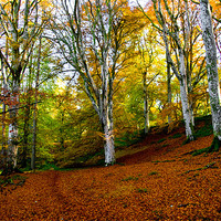 Buy canvas prints of A Carpet of Leaves by Jacqi Elmslie