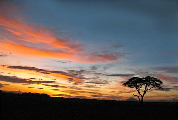 Under An African Sky Canvas print by Jacqi Elmslie