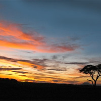 Buy canvas prints of Under An African Sky by Jacqi Elmslie