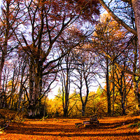 Buy canvas prints of Sunlight and Shadows by Jacqi Elmslie