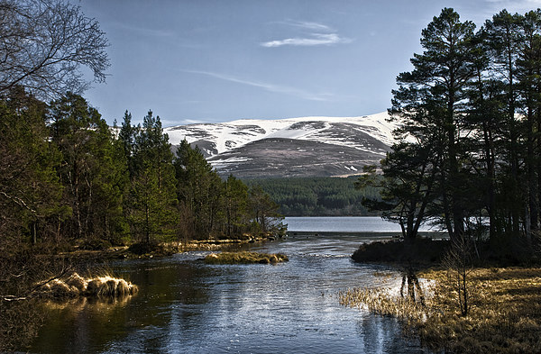 Cairngorm and Loch Morlich Canvas print by Jacqi Elmslie