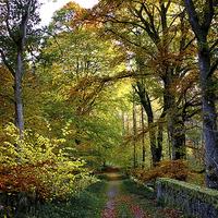 Buy canvas prints of Colours of Autumn  by Jacqi Elmslie
