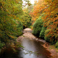 Buy canvas prints of Autumn in Cawdor Woods by Jacqi Elmslie