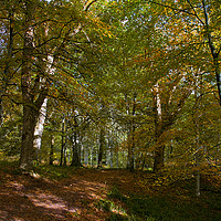 Buy canvas prints of Autumn in the Woods by Jacqi Elmslie