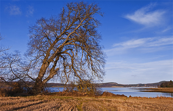 The Tree By The Shore Print by Jacqi Elmslie