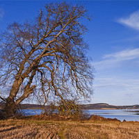 Buy canvas prints of The Tree By The Shore by Jacqi Elmslie
