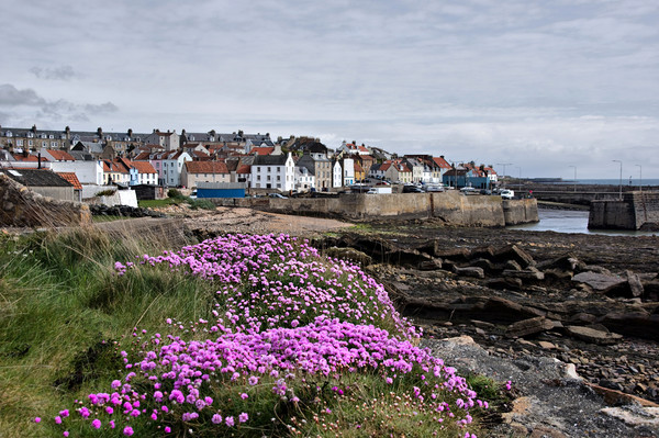 St Monans Village Fife Scotland Canvas print by Jacqi Elmslie