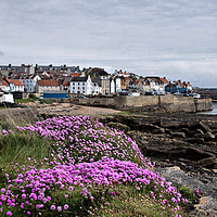 Buy canvas prints of St Monans Village Fife Scotland by Jacqi Elmslie