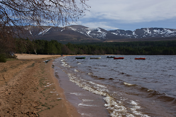Waves on the beach at Loch Morlich Canvas print by Jacqi Elmslie