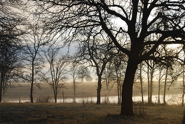 Oaks at Seven Lakes Framed Mounted Print by kim albonico