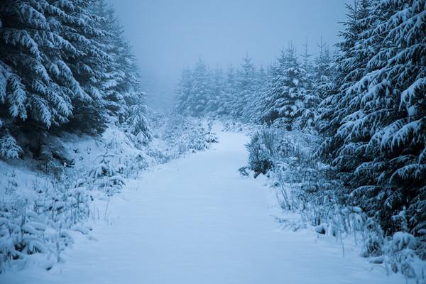 Virgin Snow Canvas print by James Buckle