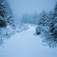 Buy canvas prints of Virgin Snow by James Buckle