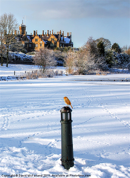 Robin, King of the Castle Canvas print by David McFarland
