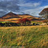 Buy canvas prints of Autumn in the Mournes by David McFarland
